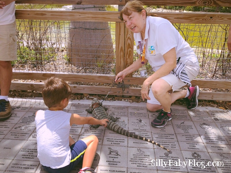 Earth Day at Zoo Miami Tegu South Florida Invasive Species